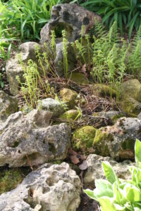 Craggy Garden of moss and ferns.